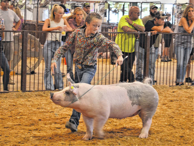 Lilly Liming keeps eye contact with the judges while steering her hog in the champion drive Monday.