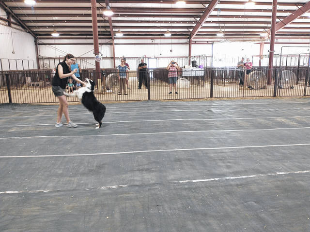 Photos by Darryl McGee | Greene County News As they take part in Greene County Fair's Dog Agility and Freestyle event, dogs displayed athletic skills. The event was put on by Greene County 4 Pawz and Clawz Club.