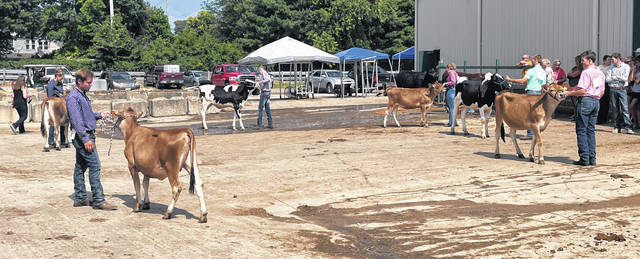 Due to scheduling conflicts, the dairy and steer portions of the Showman of Showmen contest was held outside the barn.