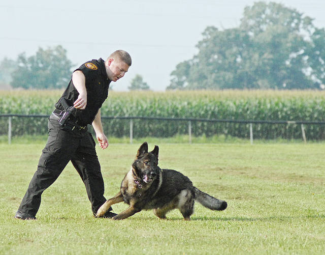 Anthony Weber | Troy Daily News  Deputy Will Roberts and his K-9 partner, Bear, from the Miami County Sheriff's Office conduct a demonstration during the Sheriff's Camp Wednesday at the Redman's Picnic Grounds in Troy.