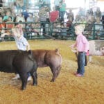 Health, safety emphasized at county fair