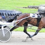 Harness racing gaining fans