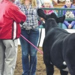 Hard work, long hours go into beef showmanship