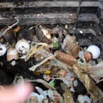 Are you ready to help nation cut food waste?