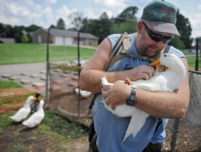 FILE – In this July 10, 2014, file photo, Iraq War veteran Darin Welker holds one of his ducks at his home in West Lafayette, Ohio. West Lafayette Village Council members voted Tuesday, July 18, 2017, to grant a variance allowing Welker to keep pet ducks he says help relieve his post-traumatic stress disorder and depression, the Coshocton Tribune reported. (Trevor Jones /The Tribune via AP, File)