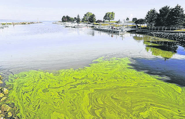 Algae floats in the water at the Maumee Bay State Park marina in Lake Erie in Oregon, Ohio, on Friday, Sept. 15, 2017.
