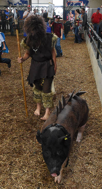 Dressed as a caveman with his triceratops pig, Quincy Schwartz, 11, of Spencerville, participates in the dressed pig contest at the Allen County Fair. Schwartz won first place in the competition on Tuesday.