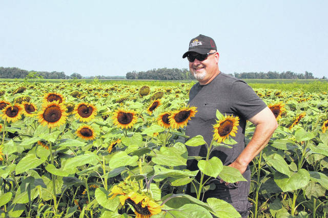 Vaughn Davis is farming sunflowers near Rockford in Mercer County. He has opened his fields to photographers eager to capture the scenery.