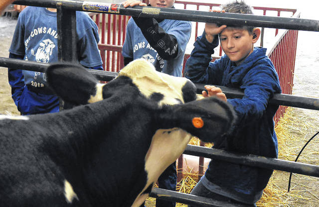 Sam Kirtley, 10, a fourth-grader at Lincolnview Elementary School, touches a cow during Cows and Plows at the Van Wert County Fairgrounds on Tuesday. Mike Schumm, an area farmer, talked with students about livestock production.