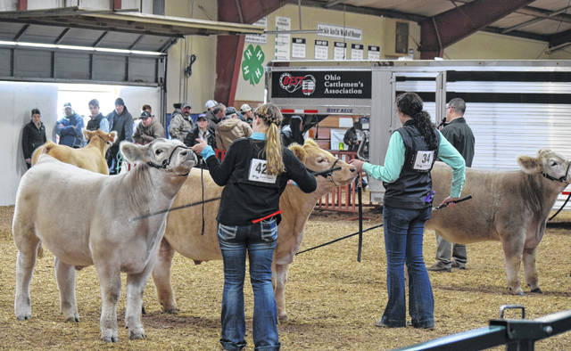 Youngsters from 10 states showed their cattle at the Heart of it All cattle show Sunday at the Allen County Fairgrounds.
