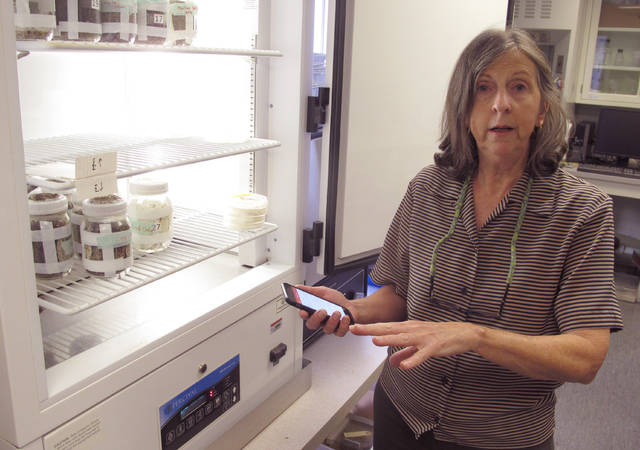 In a Tuesday, Oct. 30, 2018 photo, Ohio State University entomologist Susan Jones discusses the app she created with tips on spotting bed bugs and getting rid of them as she shows off a cooler with containers of bed bugs, in Columbus. Jones says the bugs can be tricky to identify because they're nocturnal and good at hiding.