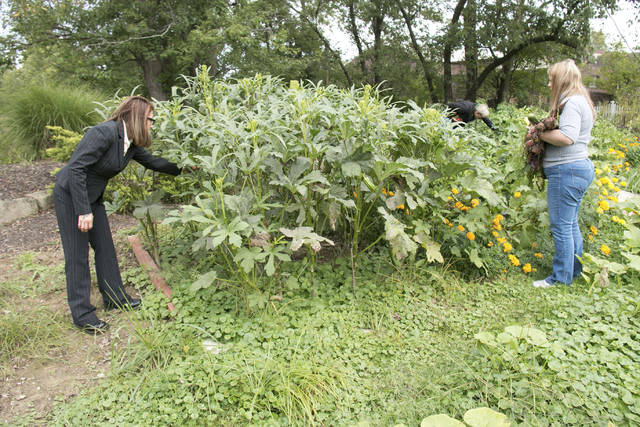 In this undated photo Brandi Gillen, left, Jacque Jones and Debbie Sisson, right, gather vegetables at the Woodrow Project recovery house and farm in North Royalton, Ohio. The North Royalton recovery house and farm started in February as a way to provide stability and training to women in recovery, Woodrow Project executive director Erin Helms said. (David Petkiewicz/The Plain Dealer via AP)