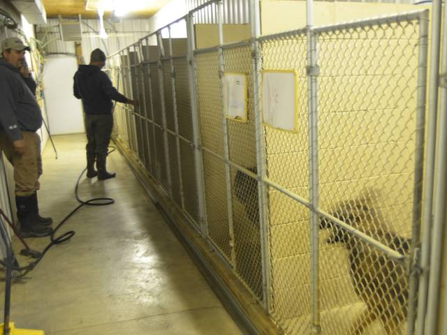 At Von der Haus Gill, the 20-acre facility can hold roughly 60 adult dogs. Each cage seen here has a small door entering a larger pen.