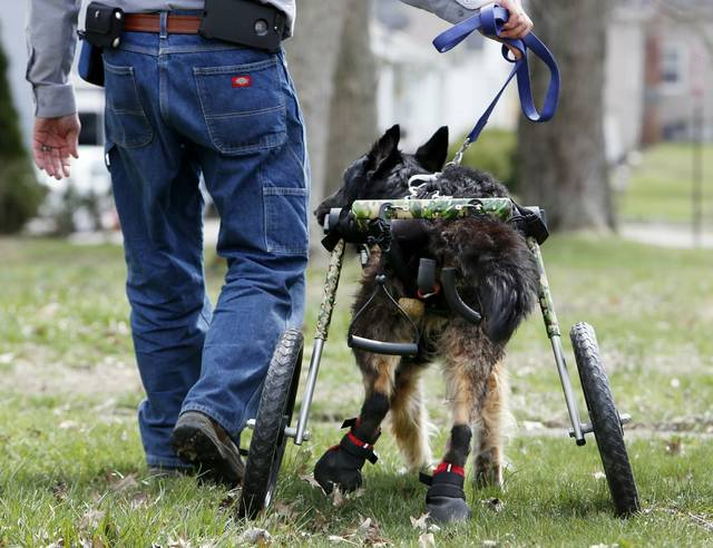 John Lizotte walks his disabled German shepherd Rex in Galion. John and Noel Lizotte run Rescued Rollers in Morrow County, a nonprofit that takes donated dog carts and reconditions them for dogs with special needs.