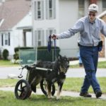 Carts help disabled Ohio dogs stay mobile
