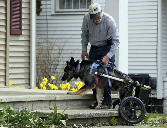 John Lizotte gives his disabled German shepherd Rex some guidance going up steps at his home in Galion.