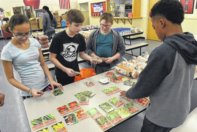 Heir Force Community School fifth-graders Adriana Donovan, 11, left, Isaac Grundisch, 11, Alan Miehls, 11, and Elisha Reddick, 11, sort out seeds during Global Youth Service Day at the school on Friday. After some research, Miehls and Grundisch came up with the idea of hydro veggie gardening for families, which means growing vegetables in their own at homes in water that could be perpetual. All it would take is seeds, water, nutrients, and maybe a grow light. The school has partnered with the West Ohio Food bank who has offered to provide the seeds needed to begin the project. This initiative is called Ҏo Child Hungry Hydro-Veggie Gardens. The school plans to use part of the $400 grant from Sodexo Foundation to purchase the aquarium, gold fish, fish food and grow light. Students are trying to prove their theory that a small investment in this could sustain a family with nutritious salads indefinitely.