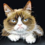 Internet's Grumpy Cat dies