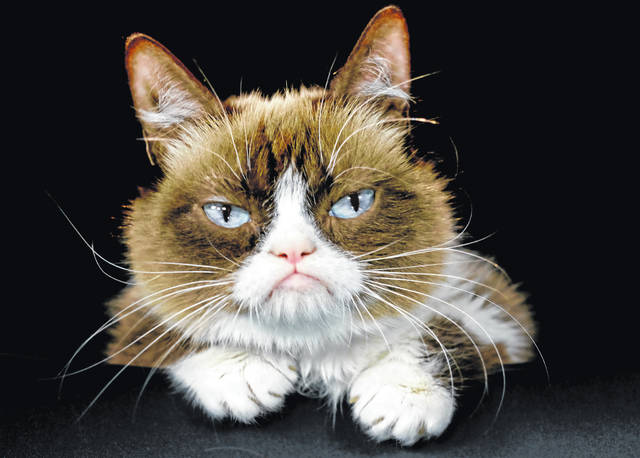 This Dec. 1, 2015, file photo shows Grumpy Cat posing for a photo in Los Angeles. Grumpy Cat, whose sour puss became an internet sensation, has died at age 7, according to her owners.