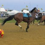 War of Will wins Preakness; another horse goes riderless