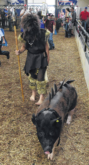 Dressed as a caveman with his triceratops pig, Quincy Swhartz, of Spencerville, participates in the dressed pig contest at the Allen County Fair last year. Swhartz won first place in the competition.