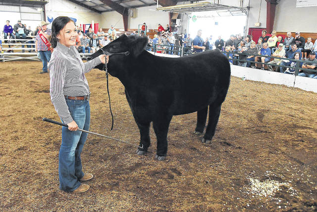 Montana Hulsmeyer, 15, of Harrod, walks her Grand Champion steer named Ledoux during the Junior Fair Livestock Auction at the Allen County Fairgrounds on Friday. Hulsmeyer steer sold for $6,000.