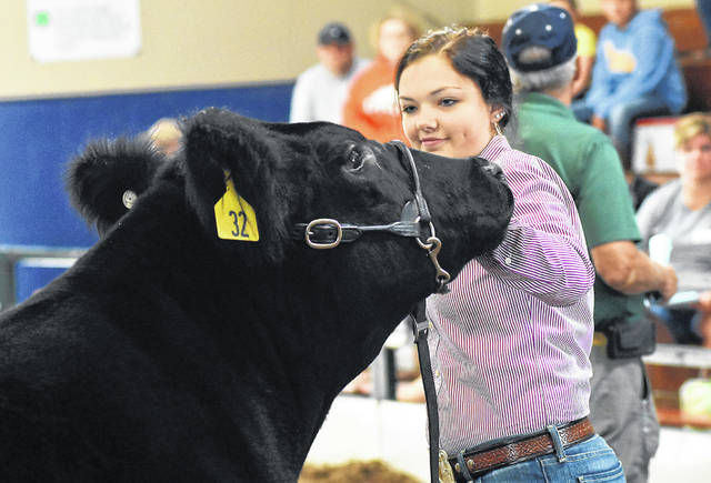 Montana Hulsmeyer, 15, of Harrod, walks her Grand Champion steer named Ledoux during the Jr Fair Livestock Auction at the Allen County Fairgrounds on Friday.