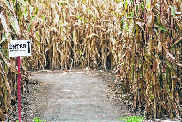The entrance of a past corn maze at Suter's beckons.