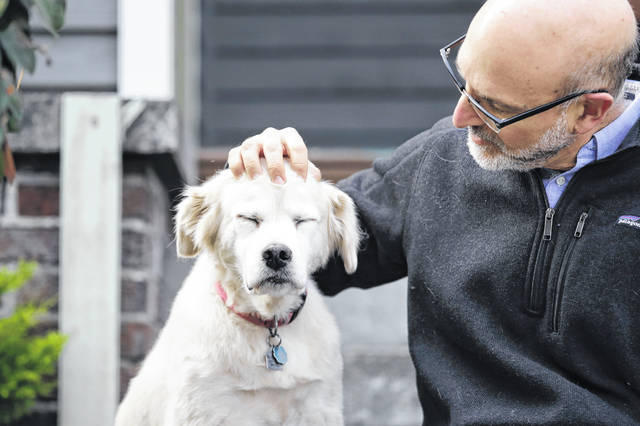 University of Washington School of Medicine researcher Daniel Promislow, the principal investigator of the Dog Aging Project grant, rubs the head of his elderly dog Frisbee at their home in Seattle. Can old dogs teach us new tricks? Hoping to shed light on human longevity, scientists need 10,000 pet dogs for the largest-ever study of healthy aging in canines. (AP Photo/Elaine Thompson)