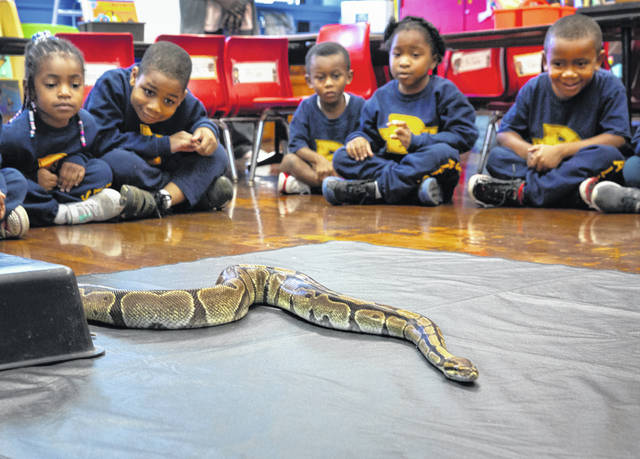 In this Oct. 23, 2019 photo, kindergartners in Emily Hervey's classroom at St. Francis de Sales in East Walnut Hills, Ohio, get a chance to meet Cue Ball, a 25-year-old ball python, who is part of the zoo ambassador program at the Cincinnati Zoo and Botanical Garden. Katie Campbell, program manager for the Zoo on the Move program, brought two of the zoo's ambassadors into the classroom so students could learn and engage with the animals.