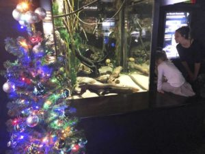 Get This: Electric eel powers aquarium's Christmas lights