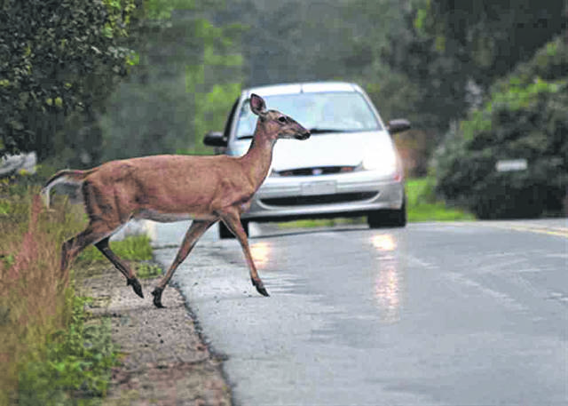 Ohio drivers have a 1-in-102 chance of hitting a deer or another animal.