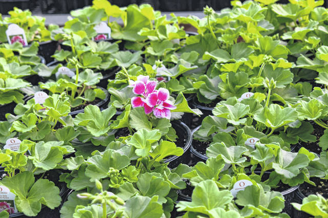 Kayla's Greenhouse will open April 13. Its hours of operation will be 9 a.m. to 7 p.m. Monday through Friday and 9 a.m. to 5 p.m. Saturday.