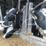 Ohio family tackles challenge of large-scale dairy farming