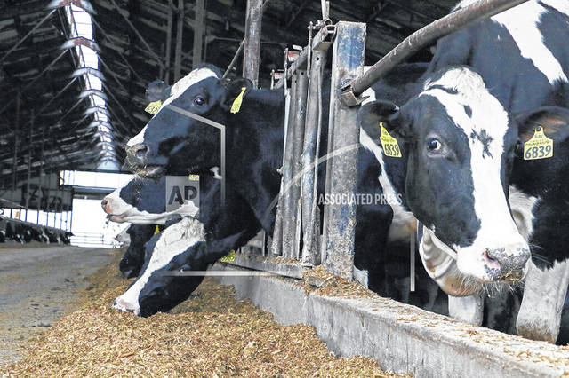 Dairy cows have been part of the the Andreas family farm in Sugarcreek, Ohio, since 1881. (Rebecca Miller/Farm and Dairy via AP)