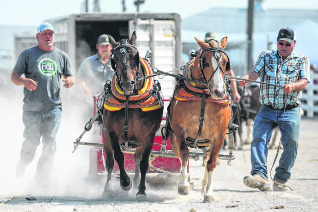 Tommie Humbert of Muncie Indiana (left) and driver Buck Troup of New Bethlehem Pennsylvania during the 40-inch pony pulling show at the Auglaize County Fair last year.