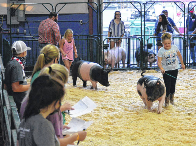Saturday night the 4-H Club members got a chance to judge livestock inside the show arena.