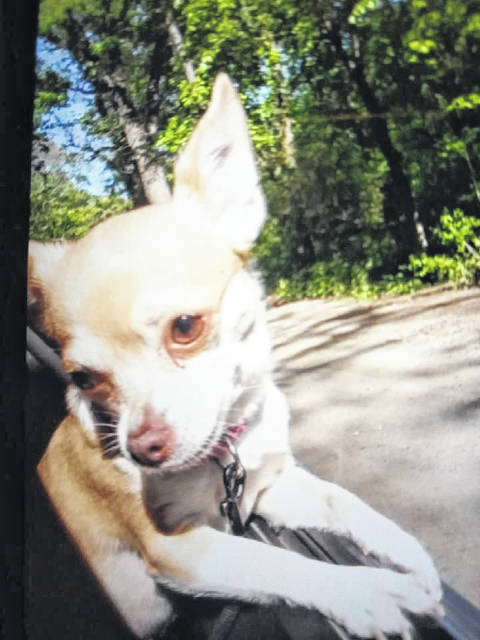 Chloe was in a car that was stolen and never made it back to her original owner. It was found in Allen County and adopted out to someone else. Now the original owner wants her back.