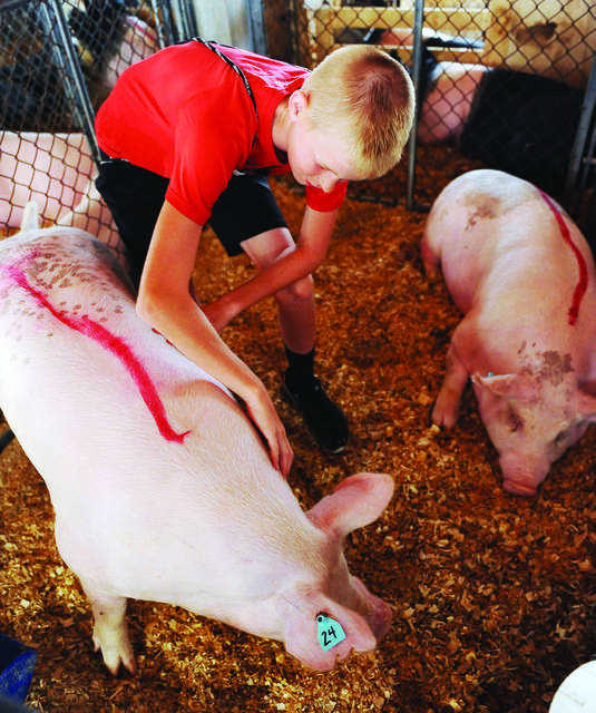 At last year's fair, Caden Homan, of New Bremen, son of Heather and John Homan, looks after the barrow he showed.