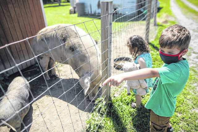 Teddy Fryling, 7, of Columbus, checks out the farm animals at the Quarry Farm Nature Preserve and Conservation Farm during an annual family day on Saturday afternoon.