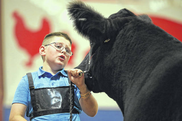 Traigh McCullough pleads with his misbehaving steer during the beef born and raised show held at the Allen County Fair.