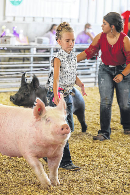 Ten-year-old Brylie Greve, of Anna, and her swine during the Auglaize County Fair on Wednesday. See more photos at limaohio.com.