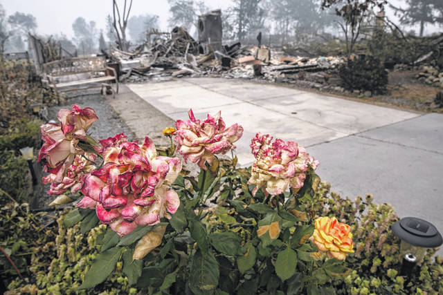 Burnt roses are seen outside a destroyed home as destructive wildfires devastate the region on Friday, Sept. 11, 2020, in Talent, Ore.