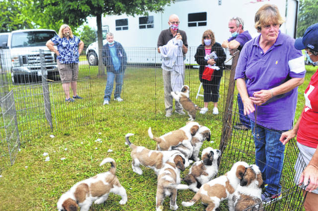 Marian McShane (right foreground) talks about some of the strengths of the litter of St. Bernards she brought with her from Tennessee.