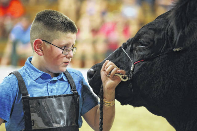 Traigh McCullough soothes his steer during the beef born and raised show held at the Allen County Fair.