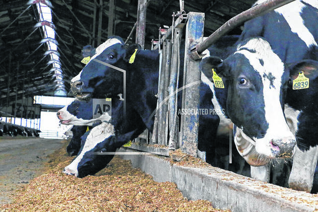 Fewer dairy farmers are going out of business and their outlook has brightened despite the pandemic.