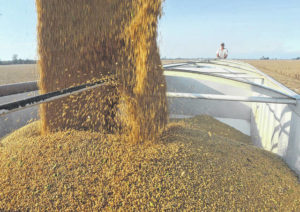 America's soy farmers paralyzed by uncertainty over weed killer