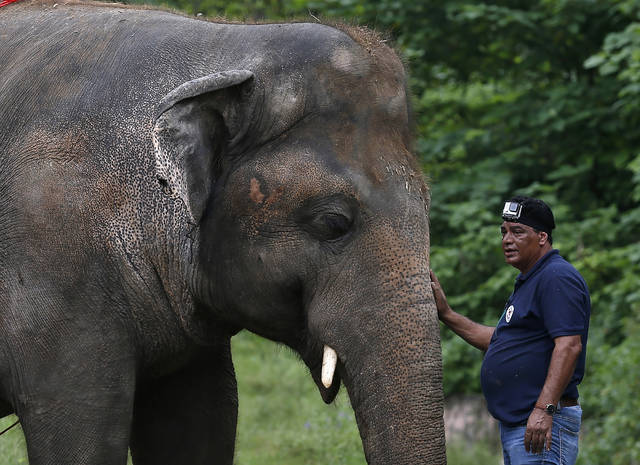 "FILE - In this Sept. 4, 2020, file photo, Dr. Amir Khalil, a veterinary from the international animal welfare organization ""Four Paws"" comforts to an elephant named ""Kaavan"" during his examination at the Maragzar Zoo in Islamabad, Pakistan. Iconic singer and actress Cher was set to visit Pakistan on Friday, Nov. 27, 2020 to celebrate the departure of Kaavan, dubbed the ""world's loneliest elephant,"" who will leave his Pakistani zoo for better conditions after years of lobbying by animal rights groups and activists. (AP Photo/Anjum Naveed, File)"