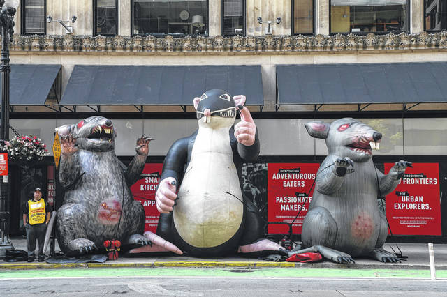 Several inflatable versions of Scabby the Rat are positioned Aug. 7, 2019, outside of a building on West Washington Street in the Chicago Loop to protest an employer's labor practices.