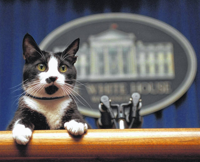 FILE- In this March 19, 1994 file photo, President Bill Clinton's cat Socks peers over the podium in the White House briefing room in Washington. Pets are back at the White House. President Joe Biden's German shepherds Champ and Major moved in over the weekend. They are the first dogs to live at the executive mansion since the Obama administration. Biden and his wife, Jill, adopted Major in 2018 from the Delaware Humane Association. They got Champ after the 2008 election.